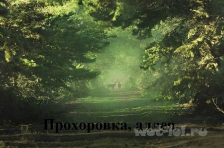 Прохоровка - аллея