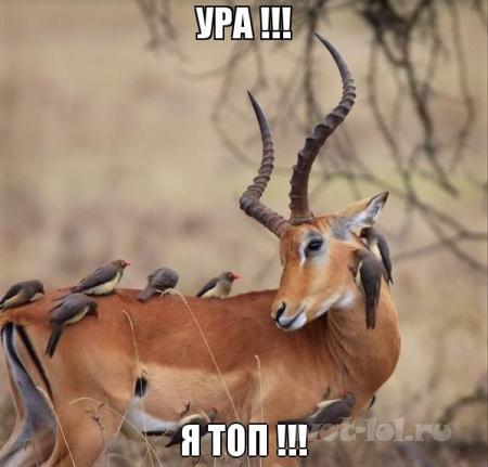 ПОСОНЫ! Я ТОП!!!