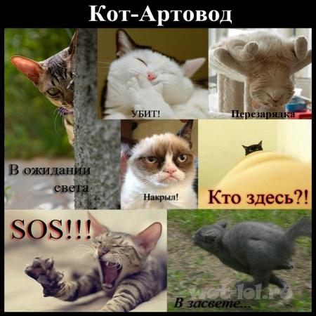 Кот-артовод