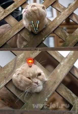 Hellcat в рандоме.