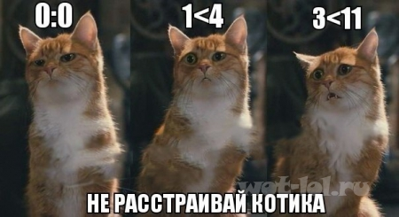 не расстраивай котика