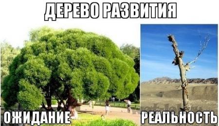 дерево развития