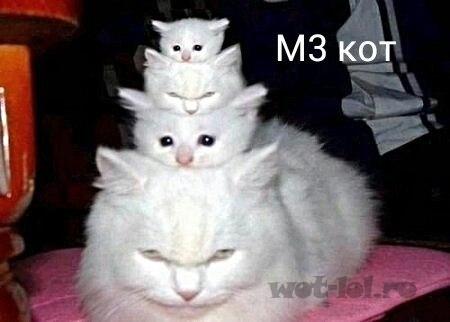 М3 кот