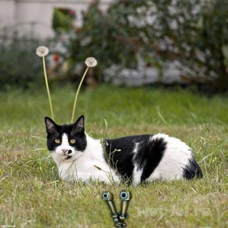 прокачанный котик