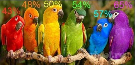 А какого цвета ты?