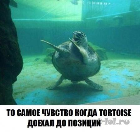 когда черепаха доехала
