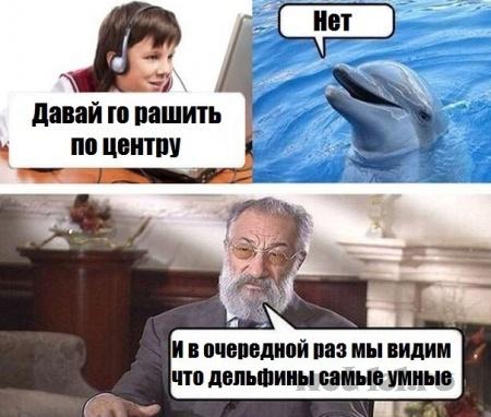 Умные дельфины
