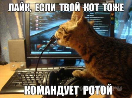 Кот-командир