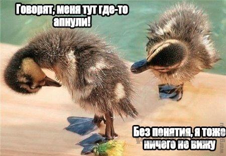 Ап гуся