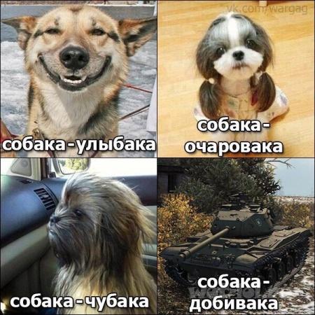 Собака добивака