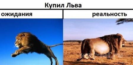 Купил Льва