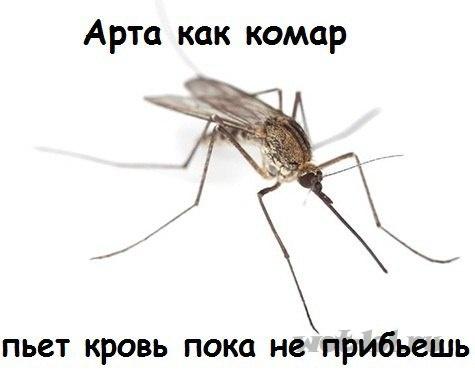 Арта как комар