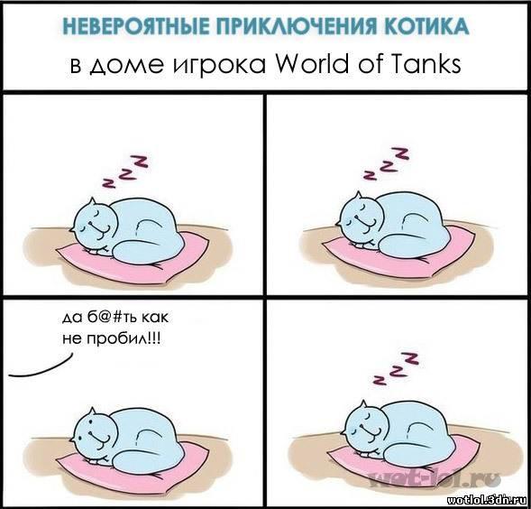 Приключения котика