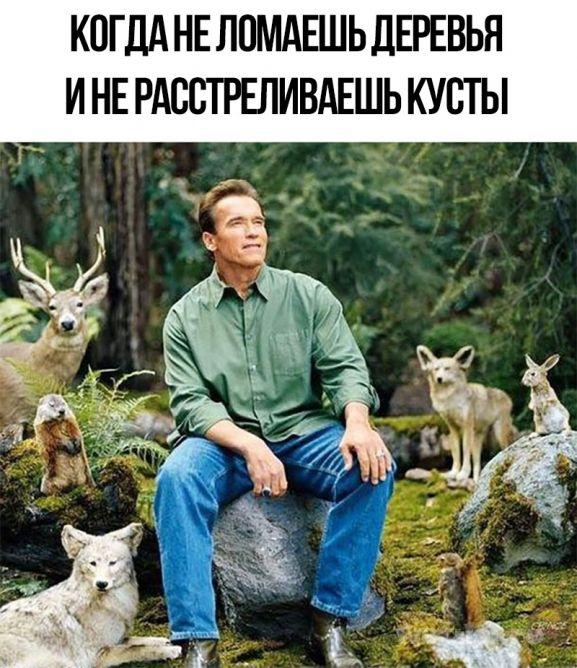 не ломаешь деревья