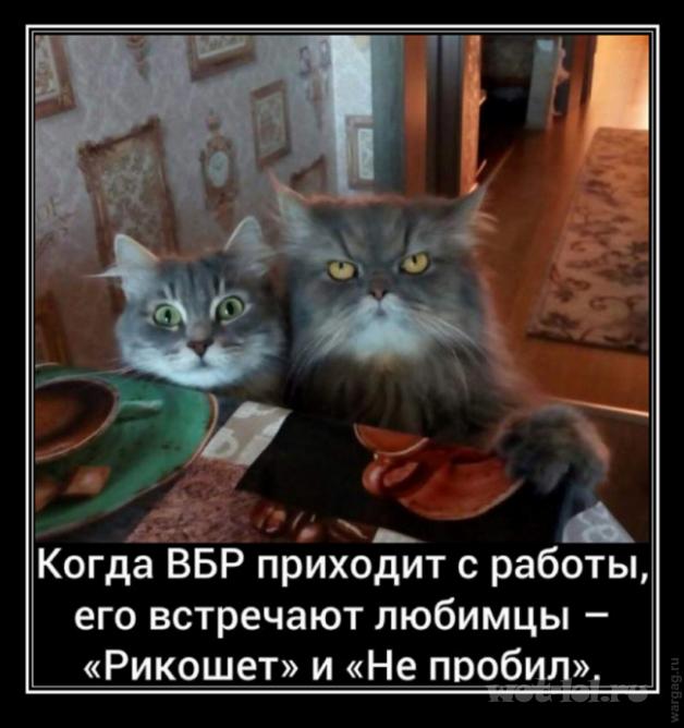 любимцы